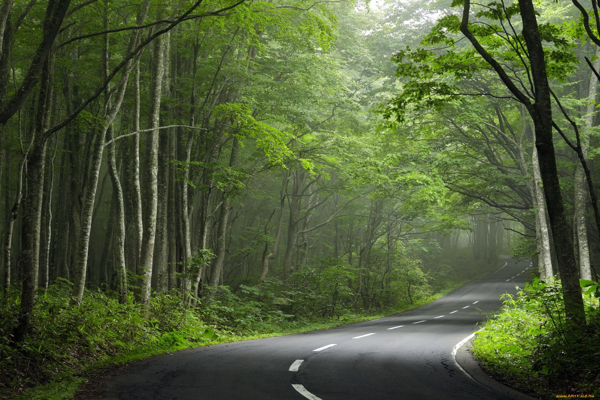картинка с природой и дорог красные